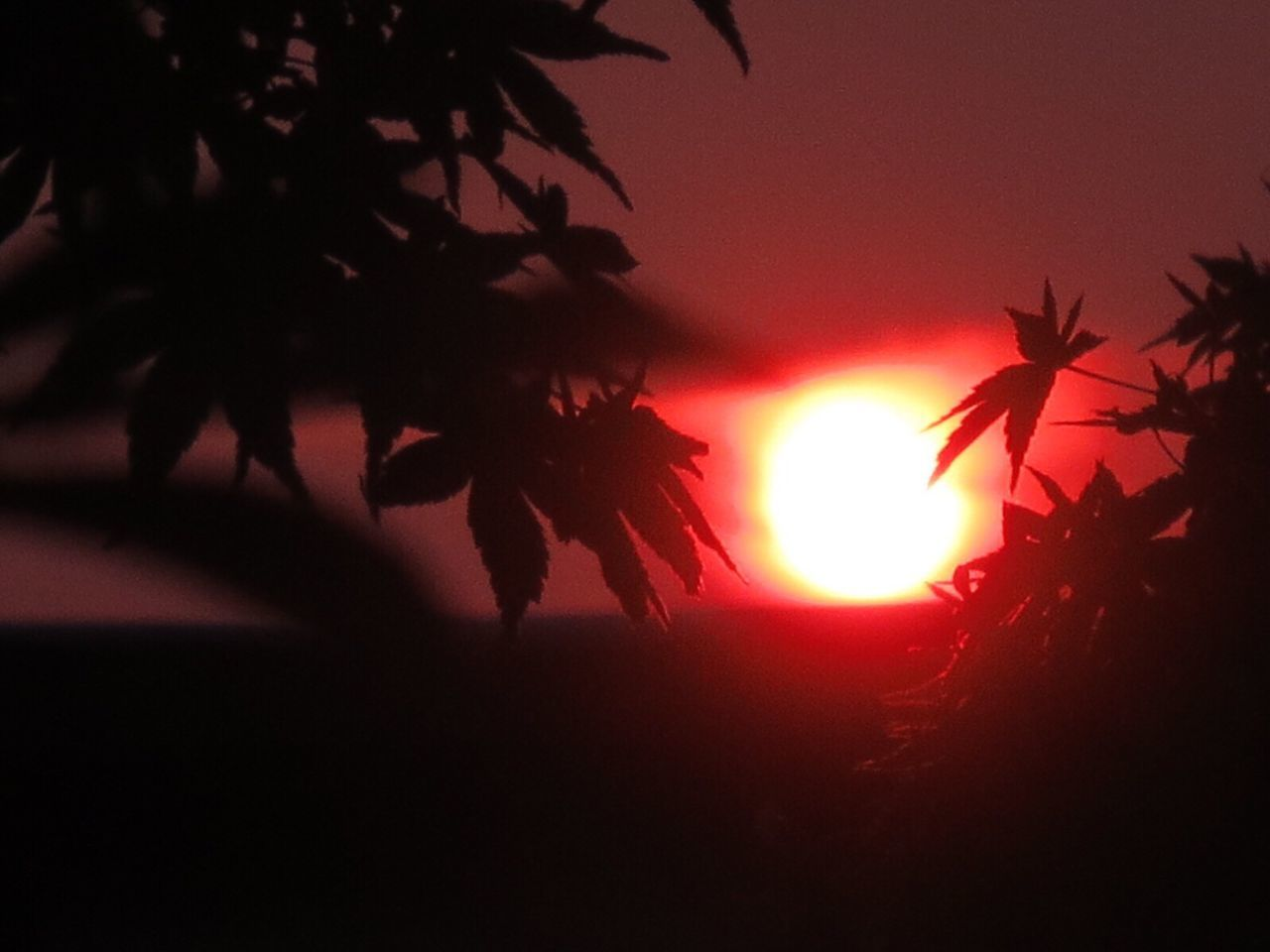 Close-Up Of Silhouette Plant Against Sun During Sunset