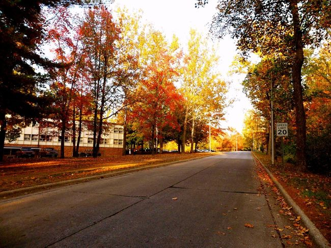 Road 8. Carbondale Illinois United States The Road- Image Gallery Fall Beauty