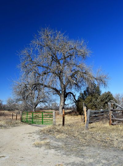 Entrance to pasture Day Outdoors Sun Shadow Warm Temperature Tree Clear Sky Safety Barbed Wire Fence