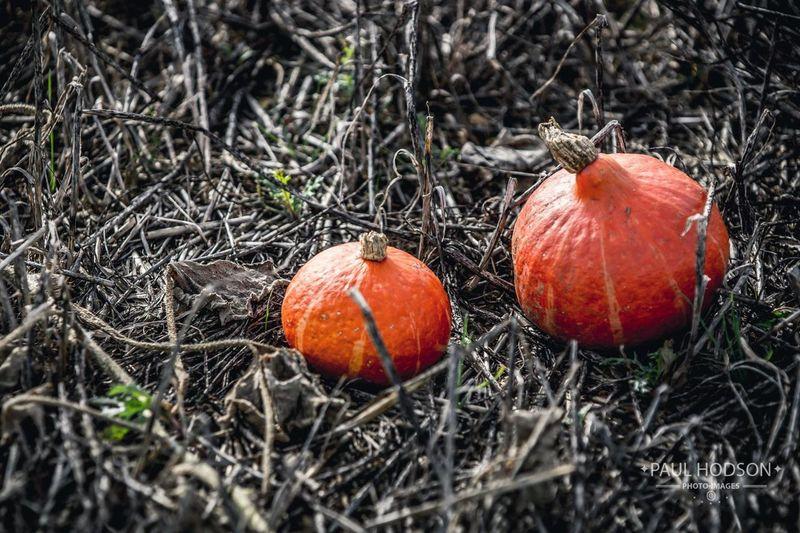 Pumpkins &
