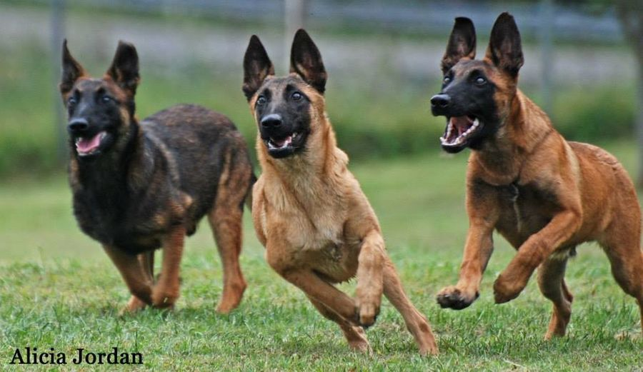 View of dogs running