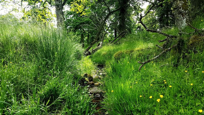 Nature Green Color Outdoors Grass Bourn Rill Rivulet Streamlet Growth No People Tranquility Beauty In Nature Day EyeEmNewHere