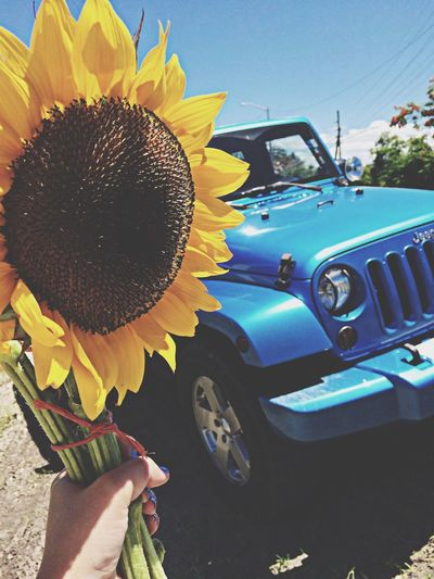 Taking Photos Flower Porn Sunflower Jeep Life
