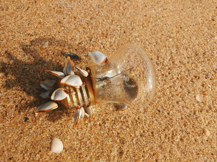 Light bulb on beach