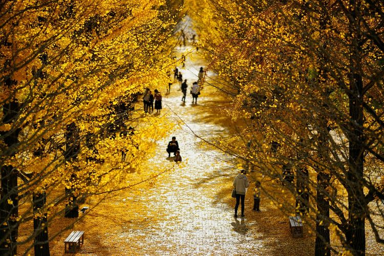 People walking with dog in autumn