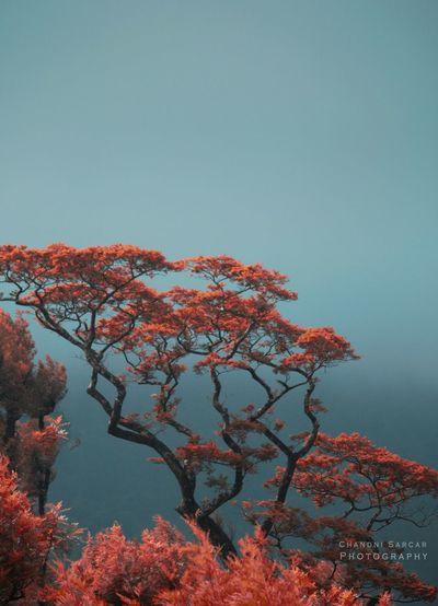 Beautiful trees of Valparai.! India Tamilnadu Trees Chandnisarcarphotography Hills SUPPORT Wanderlost