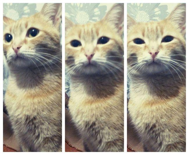 First Eyeem Photo Cute Pets I Love My Cat Cat Cat♡ Cat Lovers Pets Corner