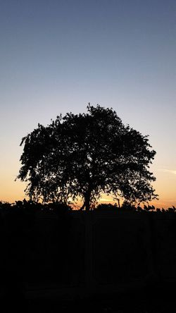 Tree Nature Sky Beauty In Nature Day Taking Photos Check This Out Sunset Sunrise Mobile_photographer Samsungphotography Sky_collection Sky Porn EyeEm Nature Lover EyeEm Gallery Sunrise_sunsets_aroundworld happy dayy
