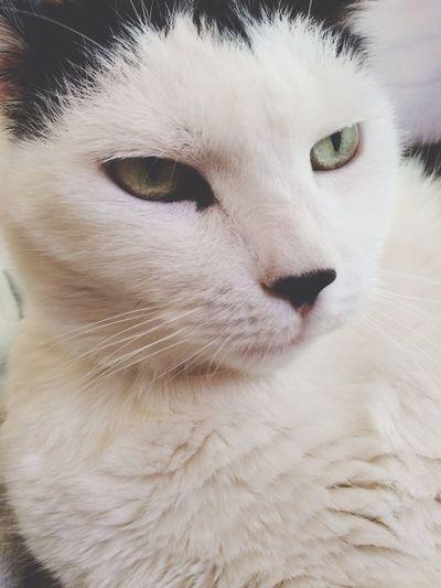 Peste ? Cat