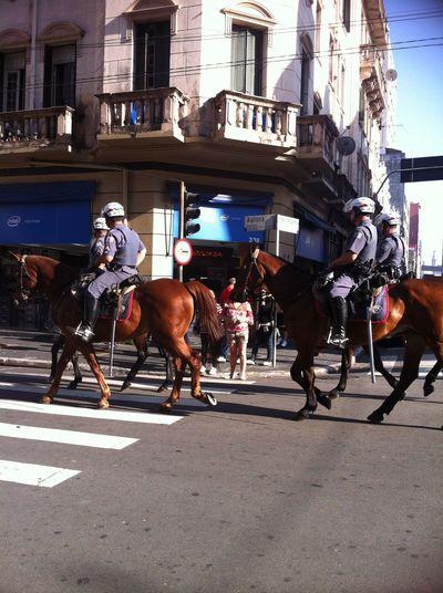 Hello World Hi! Sao Paulo - Brazil Brazil Horse