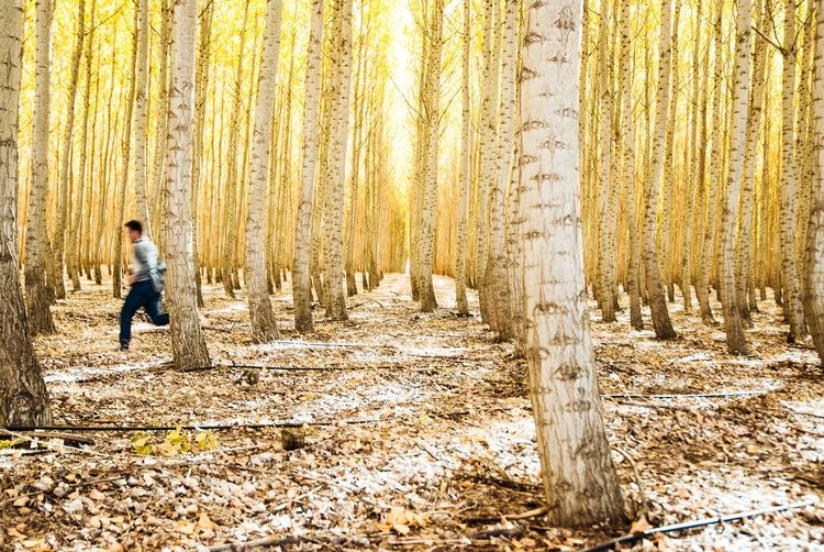 Real People Men Lifestyles One Person Leisure Activity Full Length Outdoors Tree Day Nature Trees Fall Yellow Blur Running Boardman Oregon Perspectives On Nature