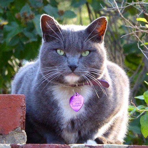 пятница  - это очень серьёзно! кот несмешно Взгляд  природа красота cat view nature badly fridaybeauty