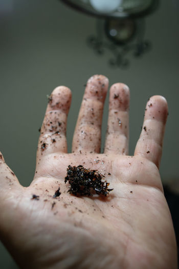 Cropped hand of person holding dirt
