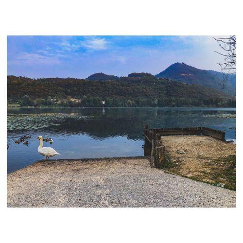 Seagulls on a lake
