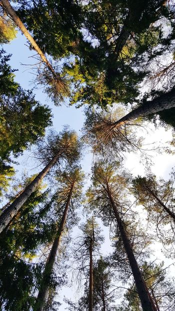 Low Angle View Tree Day Growth Outdoors Nature No People Forest Sky Close-up Beauty In Nature Hiking Tree Trunk Sunlight Nature Beauty In Nature Tree