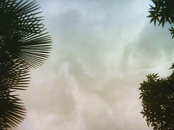 Tree Palm Tree
