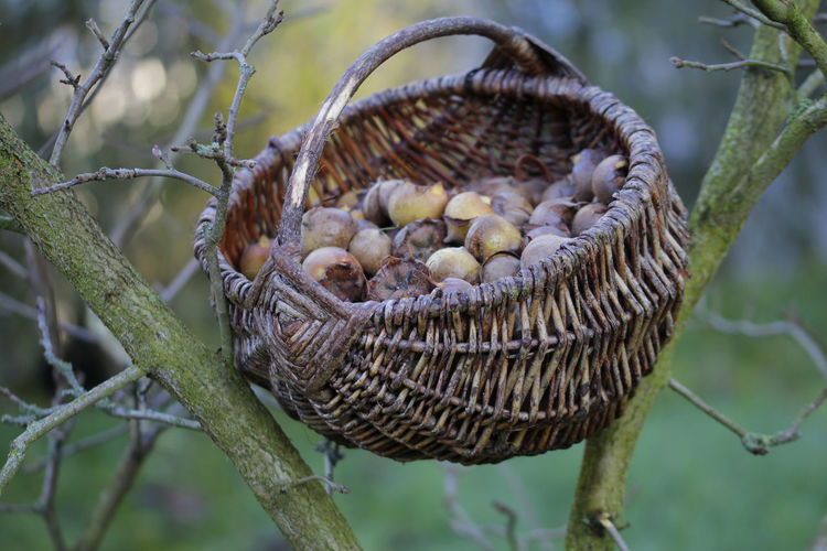 Close-up of mushrooms in basket