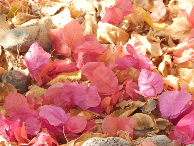 Automn Automn Leaves Flower Leaves Flowers On The Street Gravels And Leaves Spread Leaves Stones And Flowers Yellow And Pink Flowers