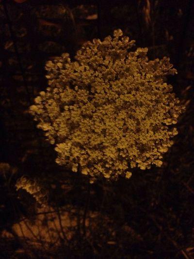 Cercare la sezione aurea in natura Ilcodicedavinci Sequenzadifibonacci Sezione Aurea Tomhanks