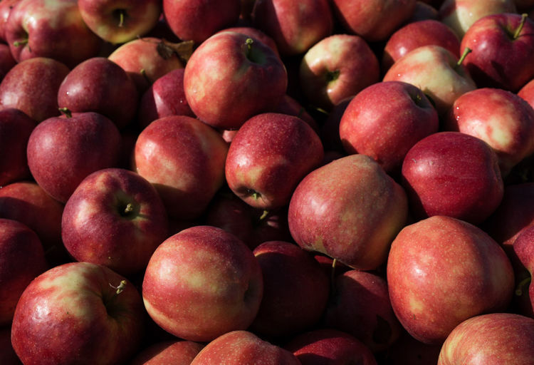 freshly harvested red apples close up | daylight photography Harvest Season Apple - Fruit Apples Close-up Daylight Photography Food Freshness Fruit Full Frame Harvest Healthy Eating Large Group Of Objects Light And Shadow Market No People Red Red Apples Still Life