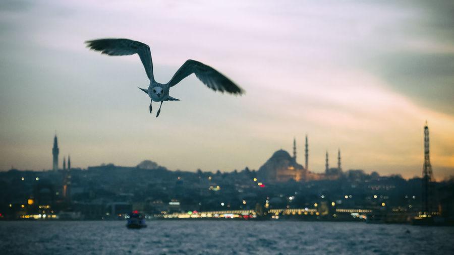 Bird Flying Over River In City Against Sky