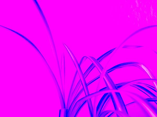Backgrounds Close-up Effect Effects Effects & Filters Effects And Filters Indoor Photography Indoor Plant Indoor Plants Negative - Positive No People Playing With Colours Playing With Effects Playing With Filters Playing With The Light Positive - Negative