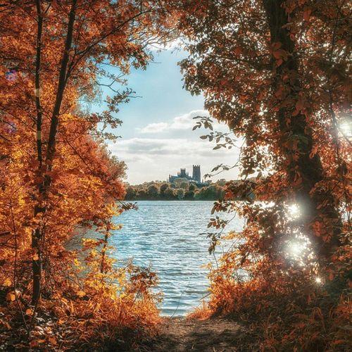 Framed Tree Tree_hunters Lake Ely Cathedral Orange Sun Warm