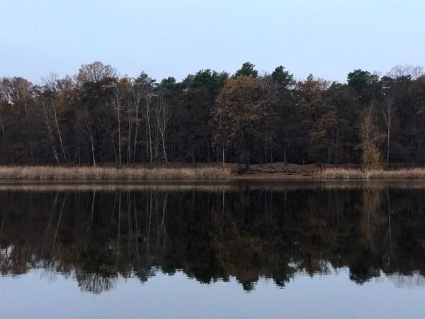 Winter water Tree Water Plant Sky Reflection Lake Nature Tranquility No People Day Beauty In Nature Scenics - Nature Waterfront Tranquil Scene Clear Sky Non-urban Scene Outdoors Forest