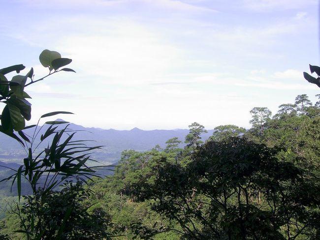พุเตย Tree Growth Nature Plant Sky Low Angle View Beauty In Nature Day Outdoors No People Leaf Mountain Freshness