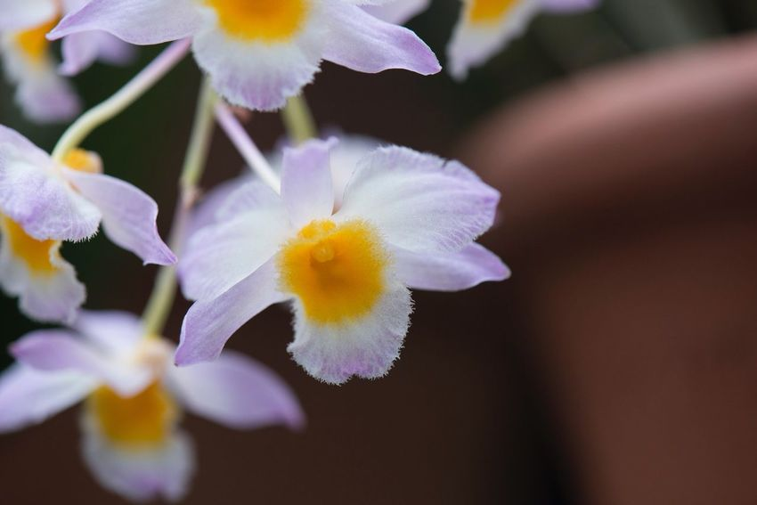 Orchid Copy Space Orchid Plant Delicate Macro Flower Petal Fragility Flower Head Beauty In Nature Nature Freshness Close-up No People Growth Blooming Yellow