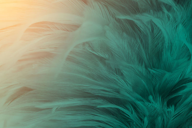 Abstract Animal Animal Body Part Animal Themes Backgrounds Bird Close-up Feather  Fragility Full Frame Hair Indoors  Lightweight Nature No People Pattern Softness Textured  Textured Effect Turquoise Colored Vulnerability  White Color