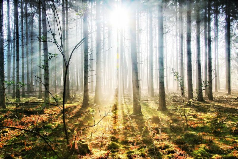 shineee Nature Nature Photography Forest Trees Naturelovers Nature_collection Tree Sunlight Forest Sky Grass Streaming Tranquil Scene Calm Scenics Tranquility Idyllic Shining Woods Fall