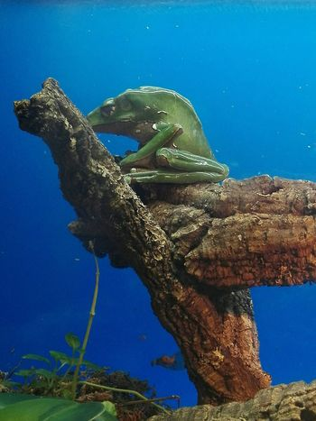 Reptile Animal Wildlife Nature Animal Themes One Animal Frog Perspective Frog EyeEm Selects