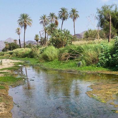 لقطة النخيل نجل غيل نهر ربيع رحلة لشباب المخواة في قنونا
