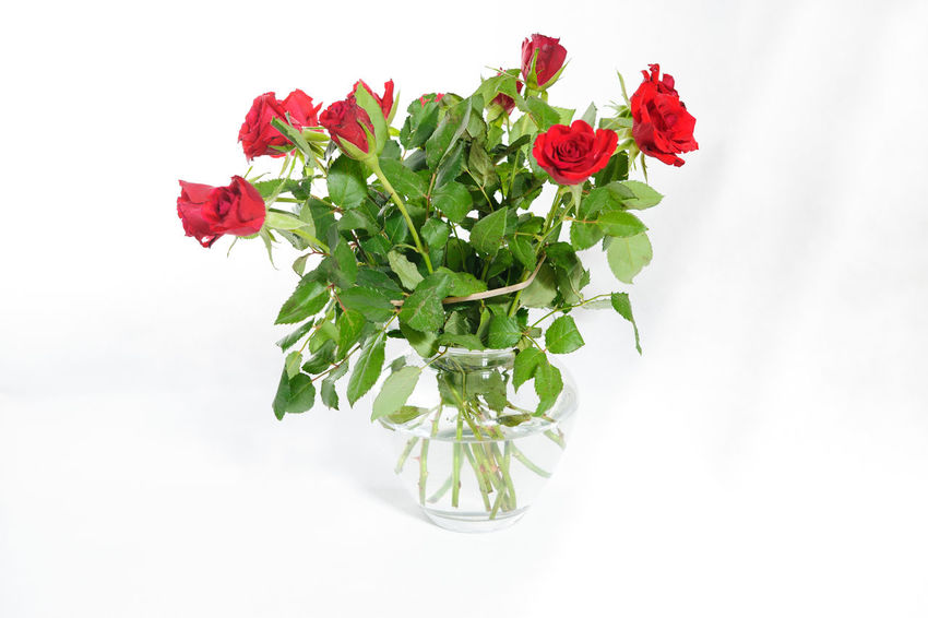 roses Beauty In Nature Bouquet Close-up Day Flower Flower Head Fragility Freshness Green Color Indoors  Leaf Nature No People Petal Plant Red Rose - Flower Studio Shot White Background