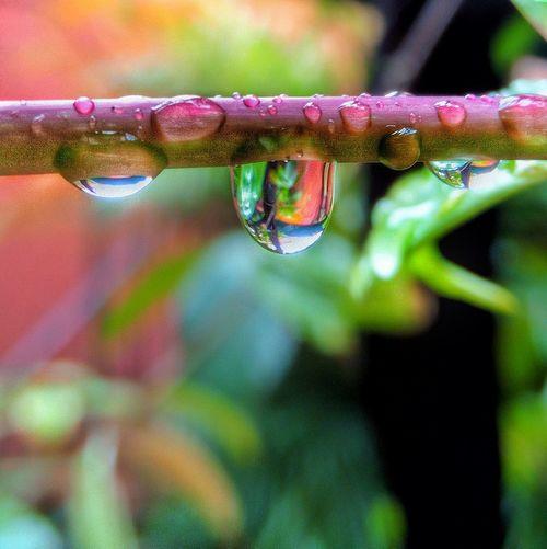 Rain Refraction