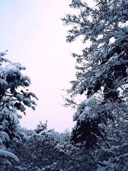 Growth Bare Tree Weather Winter Cold Temperature Beauty In Nature No People Live Far Snow Place Mood실습동 뒤에 있었던 숲. 간밤에 온 눈이 숲을 먹어버렸다!.!