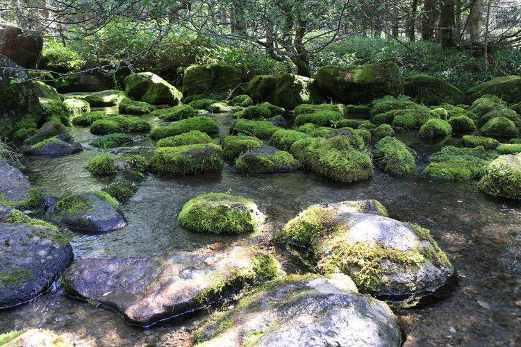 Plant Moss Tree