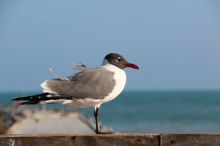 Photo taken in Key West, United States