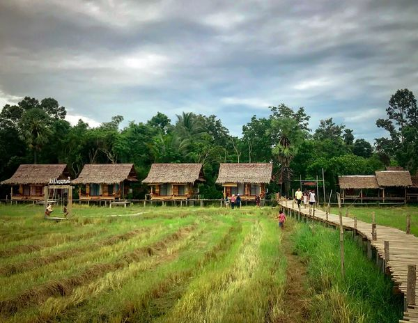 ASIA Resort Green Color Thailand Travel Rice Field Cloud - Sky Plant Tree Sky Architecture Built Structure Building Exterior Nature Land Grass Field Building Farm Agriculture Rural Scene Landscape House Green Color Day Growth