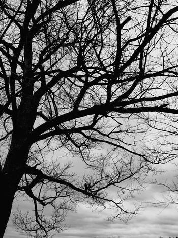 From My Point Of View My Cloud Obsession☁️ Desperately Seeking Summer Todays Weather Report I Miss Sunshine Cloudy Skies Dark And Dreary Tree And Sky Sky And Trees Bare Trees I Love Bare Trees Tree Silhouette Tree Porn Tree_collection