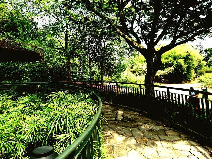 Tree Sky Bamboo