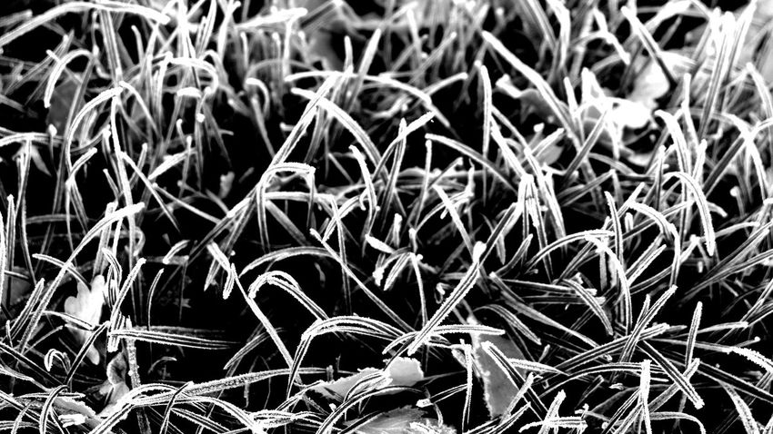 filigree nature No People Silence Purity Blackandwhite Contrast Grasses Are Beautiful Too Grass Photography Natural Structures Blackandwhite Atmospheric Mood Still Life Backgrounds Pattern, Texture, Shape And Form Structures In Nature Botanical Structures EyeEm Best Shots EyeEm Nature Lover EyeEm Best Edits EyeEm Best Shots - Black + White Monochrome Field Close-up Grass Plant Full Frame Detail Textured