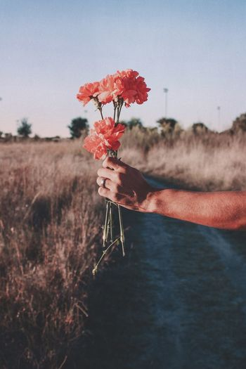 Hand holding red flowering plant on field against sky