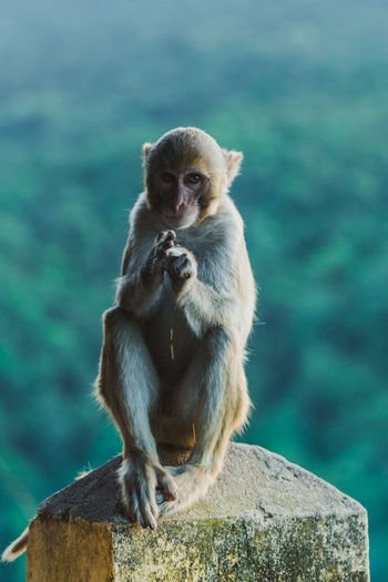Portrait of monkey sitting on wood