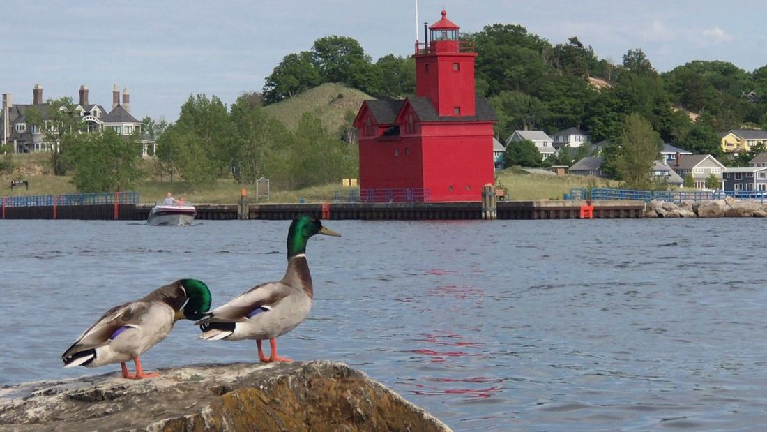 Water Animals In The Wild Bird Animal Themes Architecture Animal Wildlife Built Structure Sky Day Nature Building Exterior Outdoors Tree No People Nautical Vessel Perching Beauty In Nature Swan Mammal Lighthouse_captures Lighthouses Of Lake Michigan Lighthouse_lovers Lighthouses Lighthouse