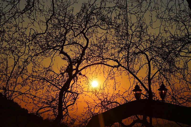 Sky Sunset Low Angle View Silhouette No People Nature Tree Beauty In Nature Branch Outdoors Plant Tranquility Scenics - Nature Tranquil Scene Sun Close-up Architecture Orange Color