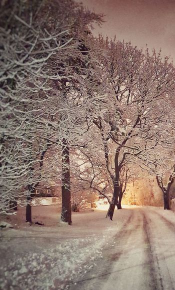 Snow Sunset Road Winter Bare Tree Cold Temperature Sky Landscape