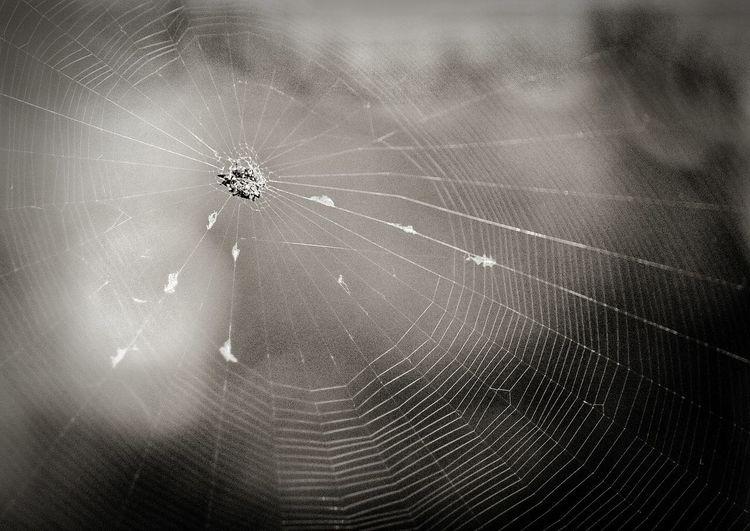 The Webdesigner