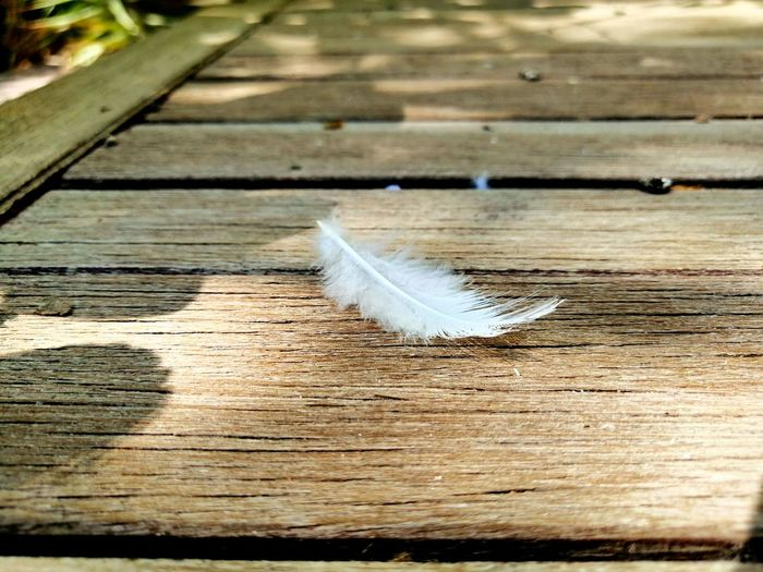 High angle view of feather on wooden table